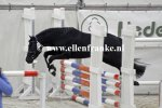 210215239 Jowout's Blacky (Haywards Guardsman x Heuvingshof Wout).JPG